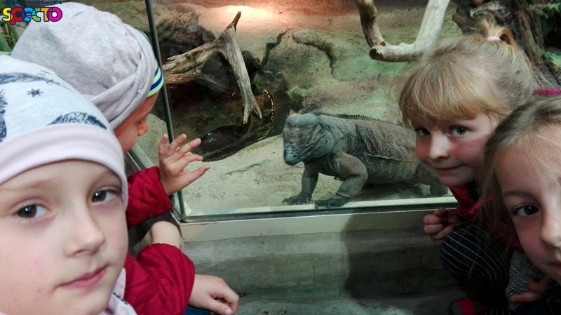 stare zoo 045